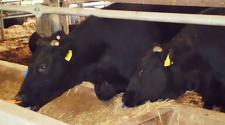 ブランド黒毛和牛「さつま福永牛」